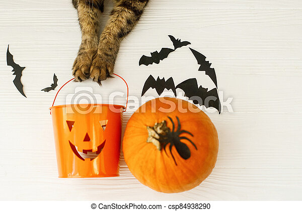Happy Halloween! Cat paws holding Jack o lantern candy bucket on white background with pumpkin, bats, celebrating halloween at home. Top view with space for text. - csp84938290