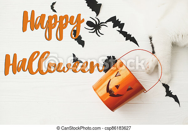 Happy Halloween text on cat paw holding Jack o lantern candy pail on white background with bats and spider decorations, top view. Trick or treat. Handwritten sign, seasonal greeting card - csp86183627