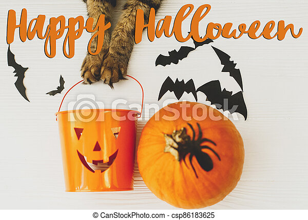 Happy Halloween text on cat paws holding Jack o lantern candy pail on white background with pumpkin, bats and spider decorations, top view. Trick or treat. Handwritten sign, seasonal greeting card - csp86183625