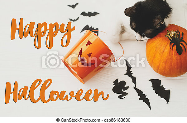 Happy Halloween text on cat paws holding Jack o lantern candy pail on white background with pumpkin, bats and spider decorations, top view. Trick or treat. Handwritten sign, seasonal greeting card - csp86183630