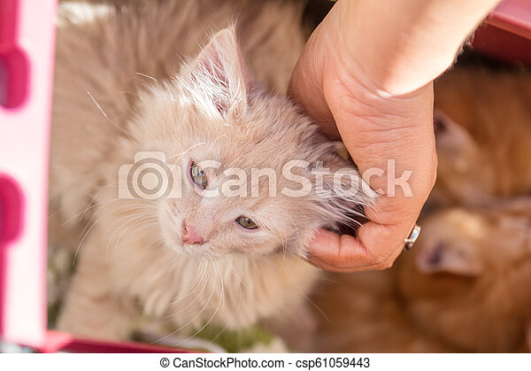Happy little red kitten likes being stroked by woman's hand - csp61059443