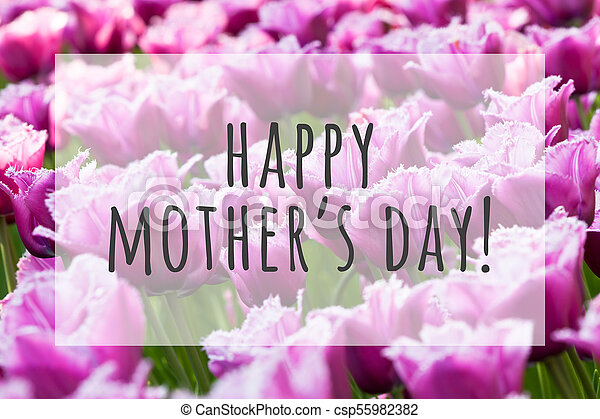 Happy Mothers Day Text On Blurred Flowers Background