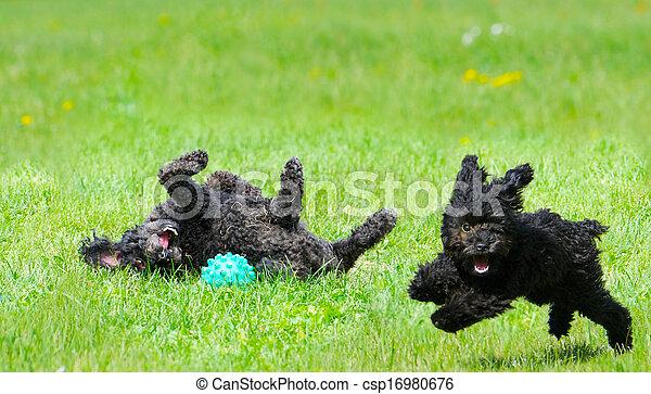 Happy pups. - csp16980676