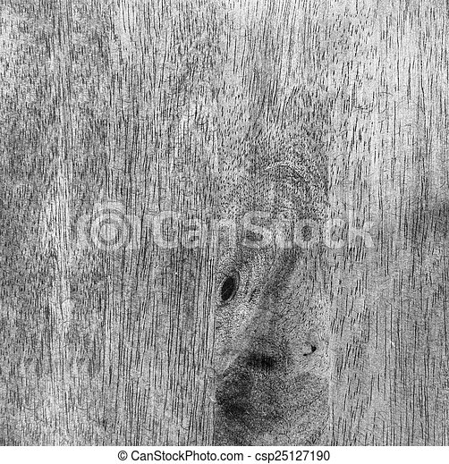 Hard wood texture background - csp25127190