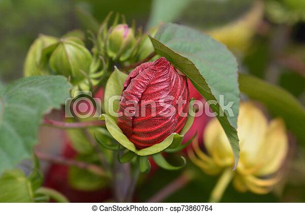 Hardy hibiscus Luna Red - csp73860764