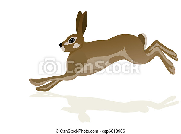 Hare - csp6613906