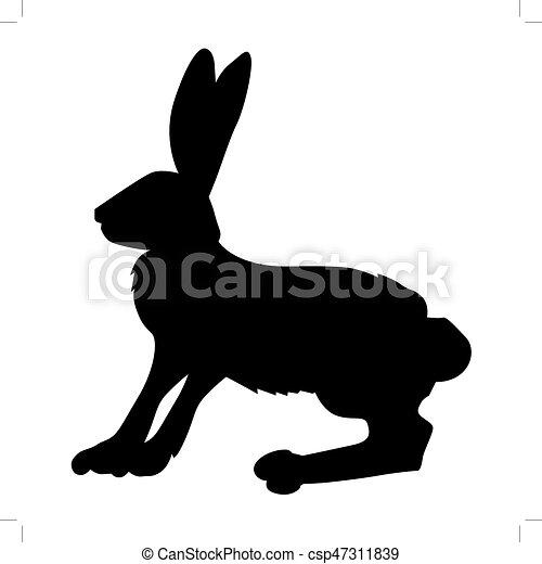 hare - csp47311839