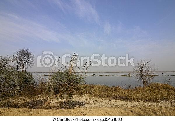 harike wetlands - csp35454860