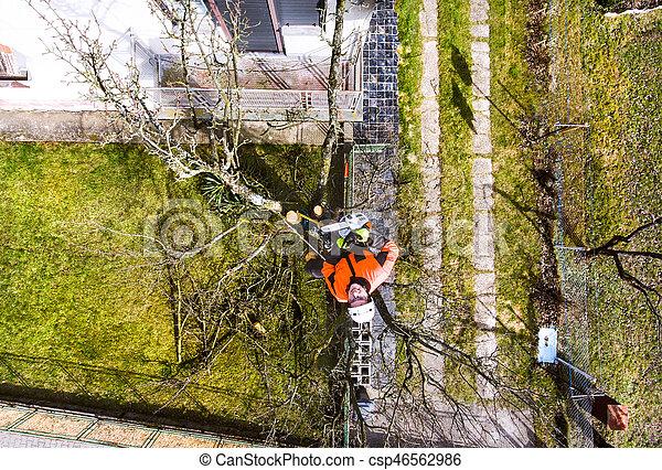 harnais, bûcheron, arbre., tronçonneuse, taille - csp46562986
