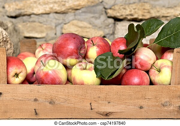 Harvest of fresh red apples in a wooden crate. - csp74197840