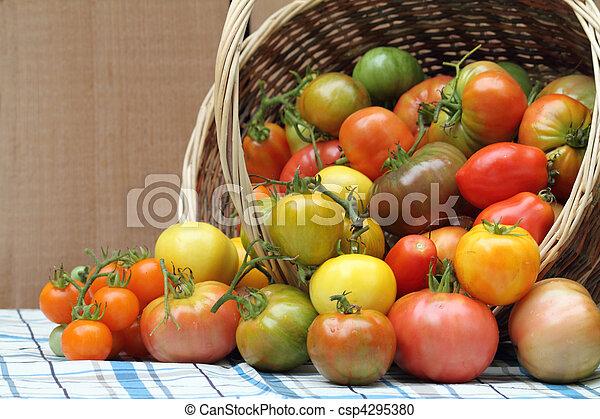 Harvest of freshly picked organic heritage tomatoes - csp4295380