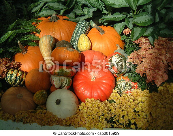 Harvest Pumpkins - csp0015929