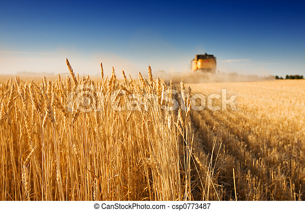 Harvest time - csp0773487