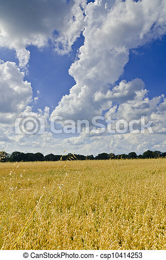 harvest time - csp10414253