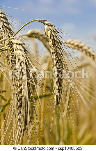 harvest time - csp10408523
