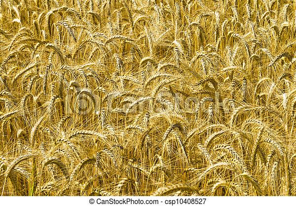 harvest time - csp10408527
