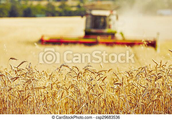 Harvest time - csp29683536