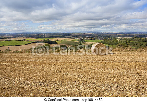 harvest time view - csp10814452