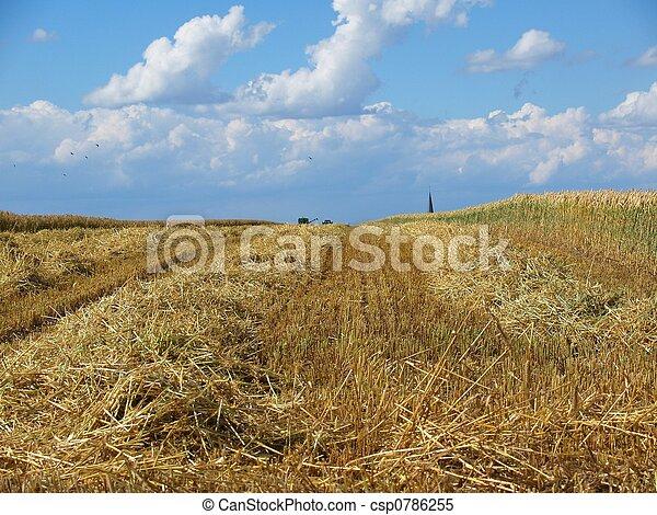 Harvested cornfield - csp0786255