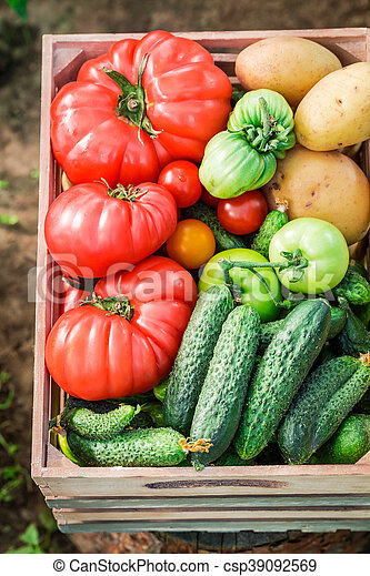 Harvested tomatoes and cucumbers in wooden box - csp39092569
