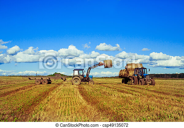 Harvested  wheat field - csp49135072