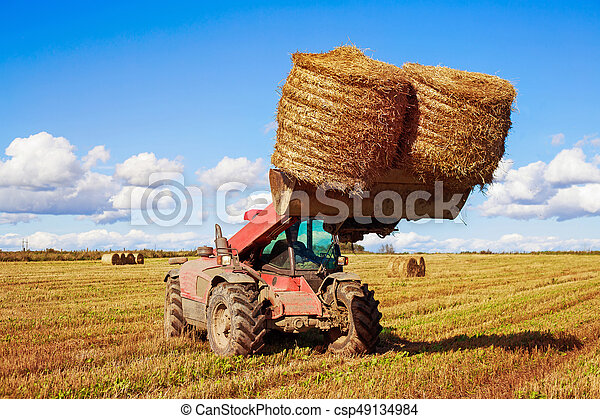 Harvested  wheat field - csp49134984