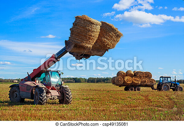 Harvested  wheat field - csp49135081