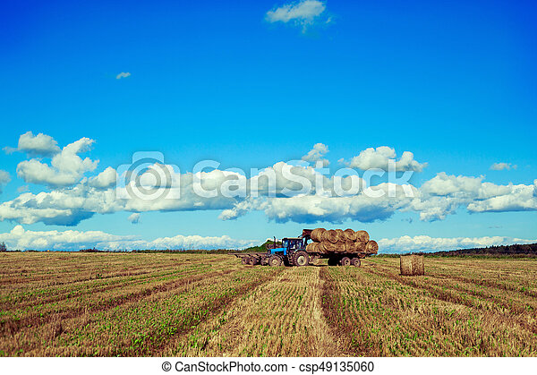 Harvested  wheat field - csp49135060