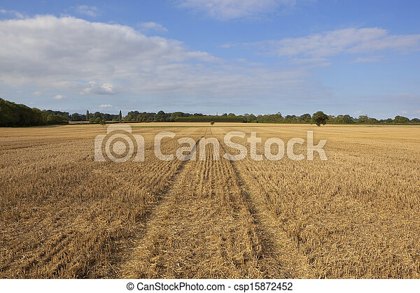 harvested wheat field - csp15872452