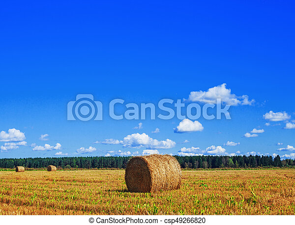 Harvested  wheat field - csp49266820