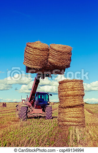 Harvested  wheat field - csp49134994