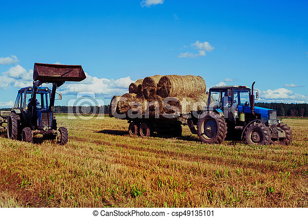 Harvested  wheat field - csp49135101