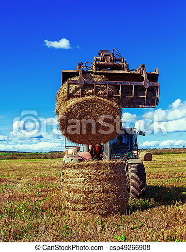 Harvested  wheat field - csp49266908