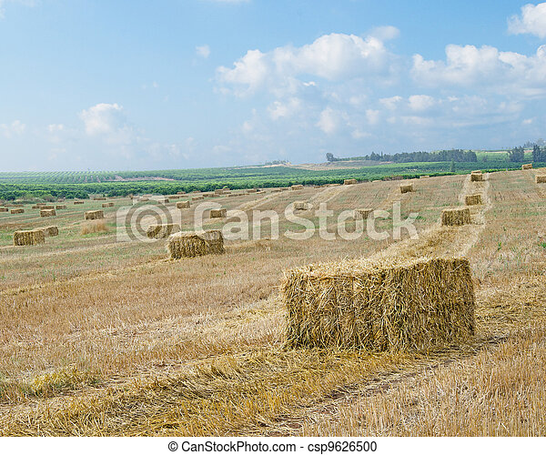 Harvested wheat field - csp9626500