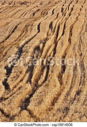 Harvested Wheat field - csp18914936