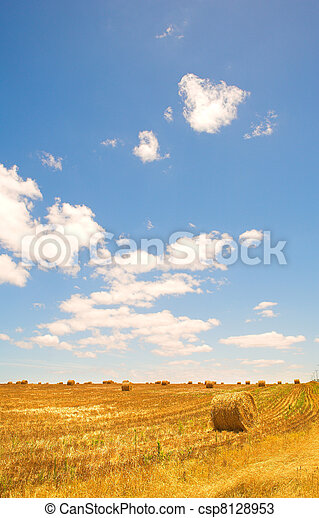 Harvested Wheat Field - csp8128953