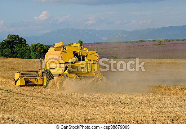 Harvester gathers the wheat crop - csp38879003