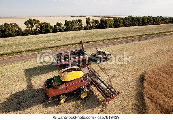 Harvester with Grain Cart - csp7619439