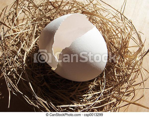 Hatched Egg - csp0013299