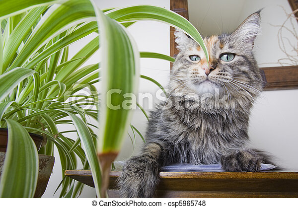 Haughty Cat - csp5965748
