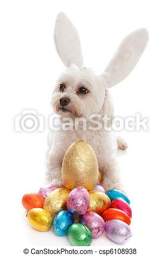 haustier, eier, ostern, hund, tier - csp6108938