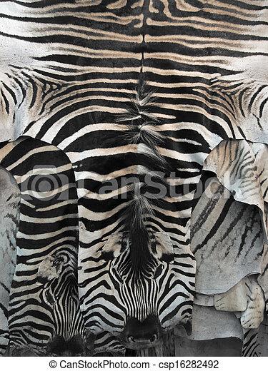 haut teppich zebra auf teppiche zebrafell schlie en stockfotos suche foto clipart. Black Bedroom Furniture Sets. Home Design Ideas