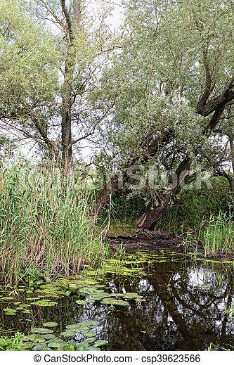 Havel river at summer time (Brandenburg, Germany). - csp39623566
