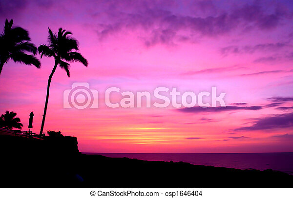 Hawaii Sunset and Palm Trees - csp1646404