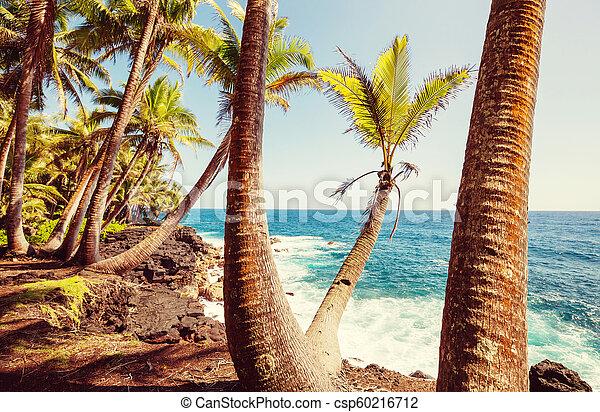 Hawaiian beach - csp60216712