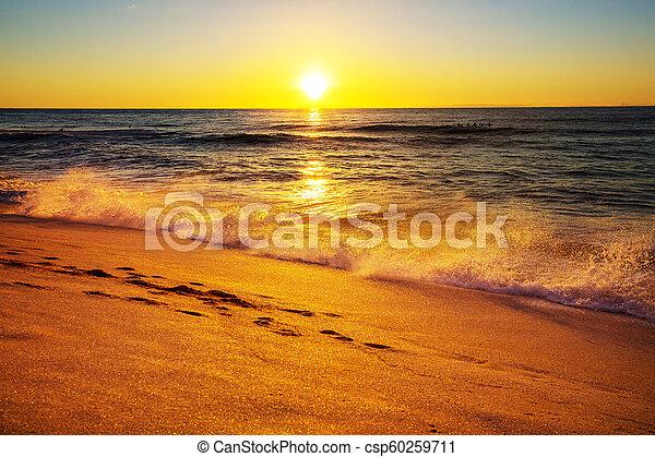 Hawaiian beach - csp60259711