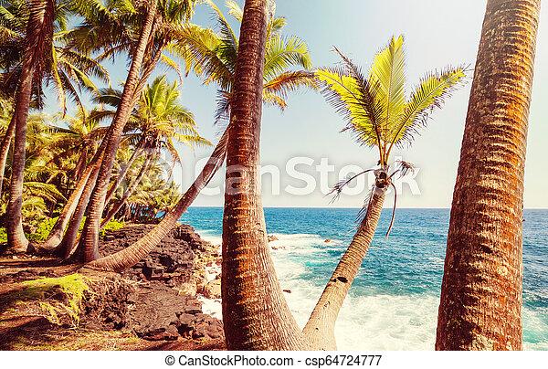 Hawaiian beach - csp64724777