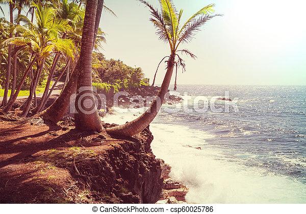 Hawaiian beach - csp60025786