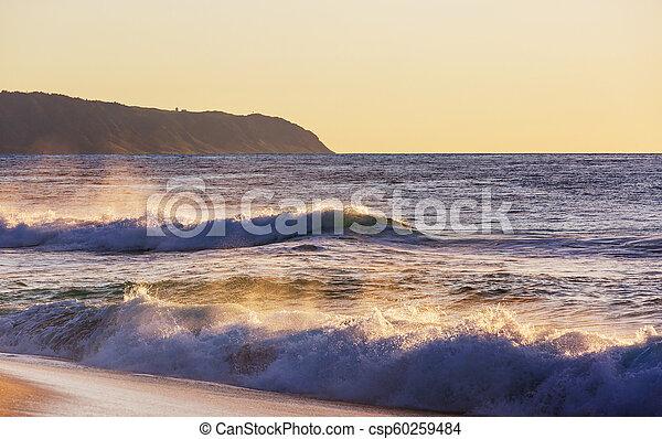 Hawaiian beach - csp60259484