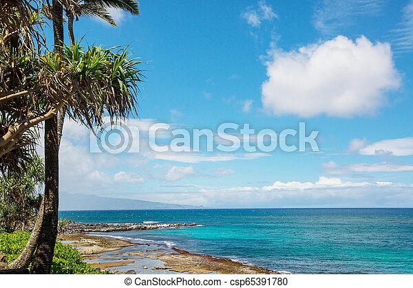 Hawaiian beach - csp65391780